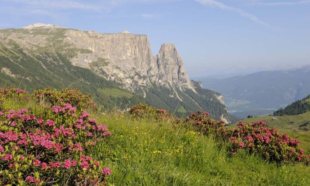 Frühling Seiser Alm - Südtirol: Hier wird die Natur zum Erlebnis