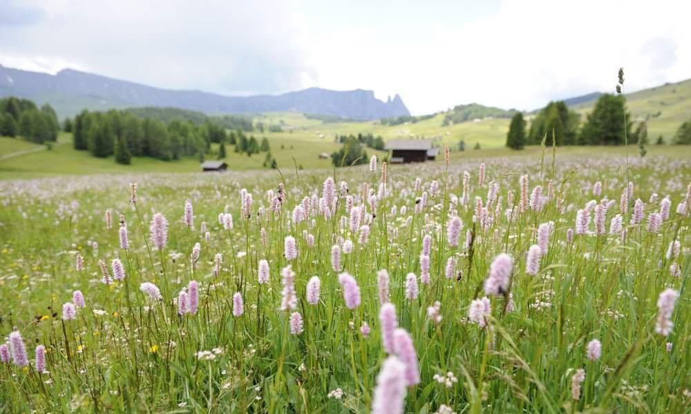 Entdecken Sie den Frühling auf der Seiser Alm in Südtirol