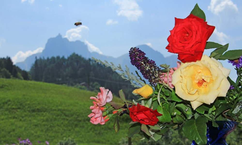 Sommerurlaub Dolomiten: wenn die Flora in voller Blüte steht